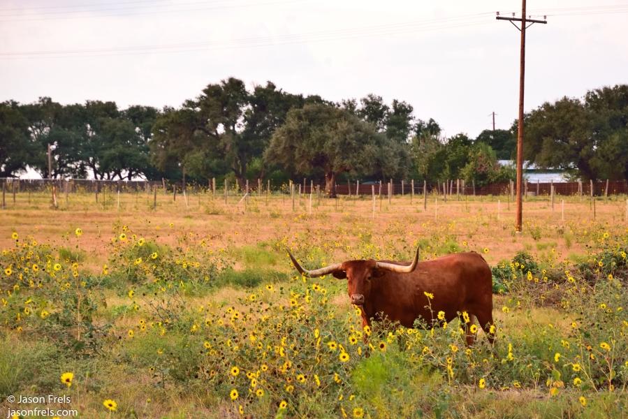longhorn leander texas