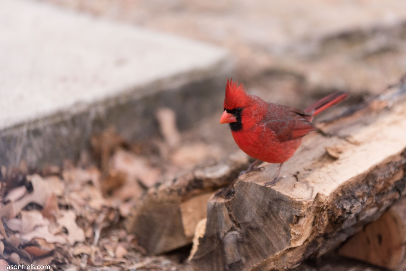 Lake Brownwood Texas cardinal