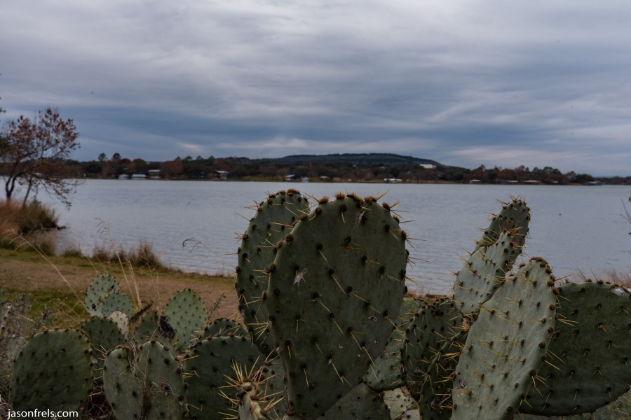 Inks Lake cactus on cloudy day