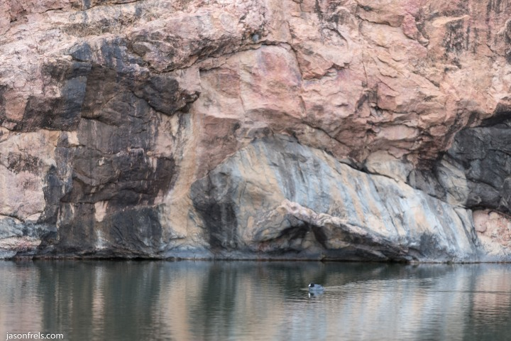 Inks Lake duck reflections