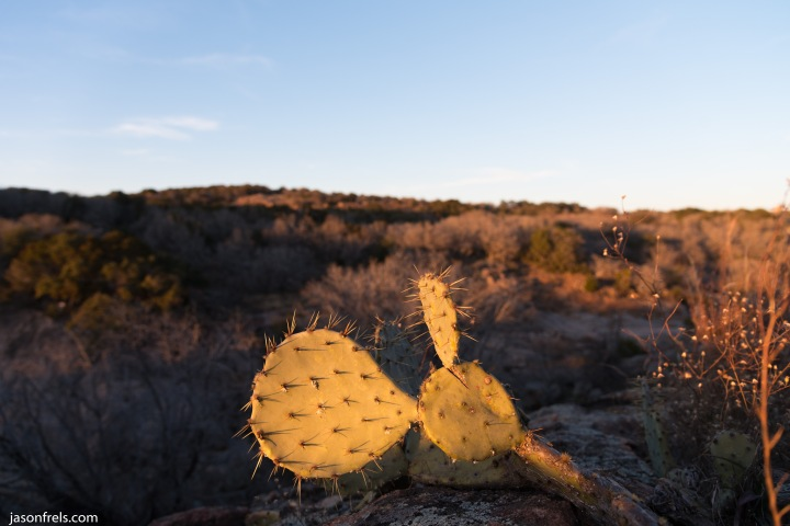 Cactus at Inks Lake State Park Texas