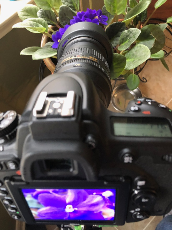 Nikon D750 DSLR with kenko extension tubes macro shot with iPhone 8
