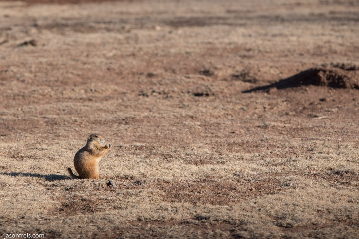Caprock Canyons State Park Texas Prairie Dog