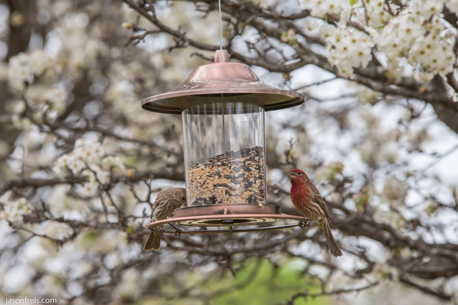 Finch-Bird-Feeder-2