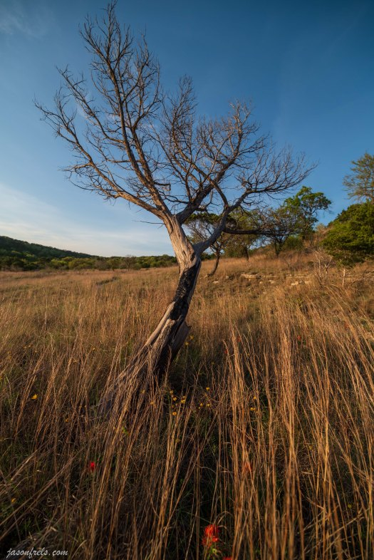 Balcones Canyonlands National Wildlife Refuge lonely tree