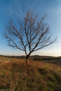 Balcones Canyonlands National Wildlife Refuge lonely tree on the hiking trail
