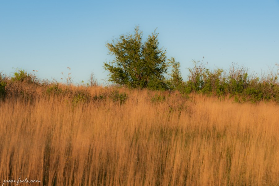 Long exposure grass in wind Balcones Canyonlands NWR
