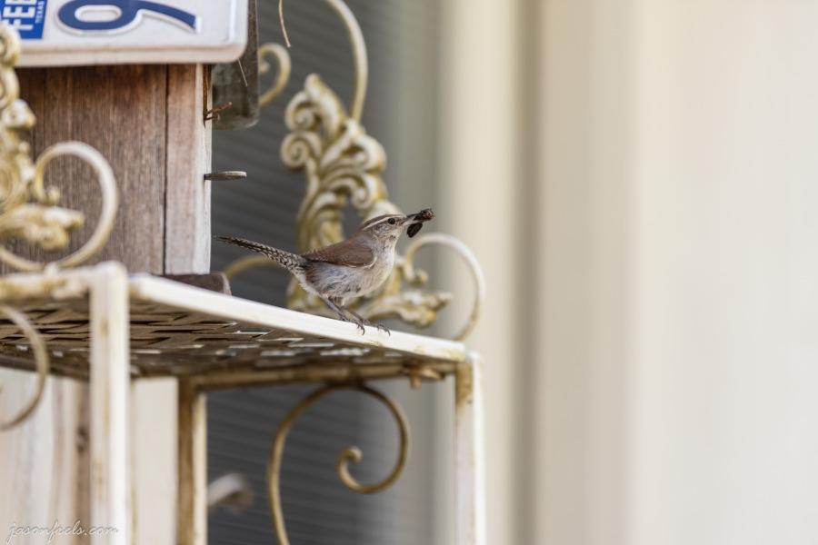 Bird at bird house Texas