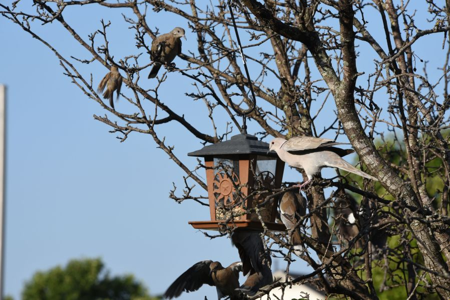 Birds at my birdfeeder