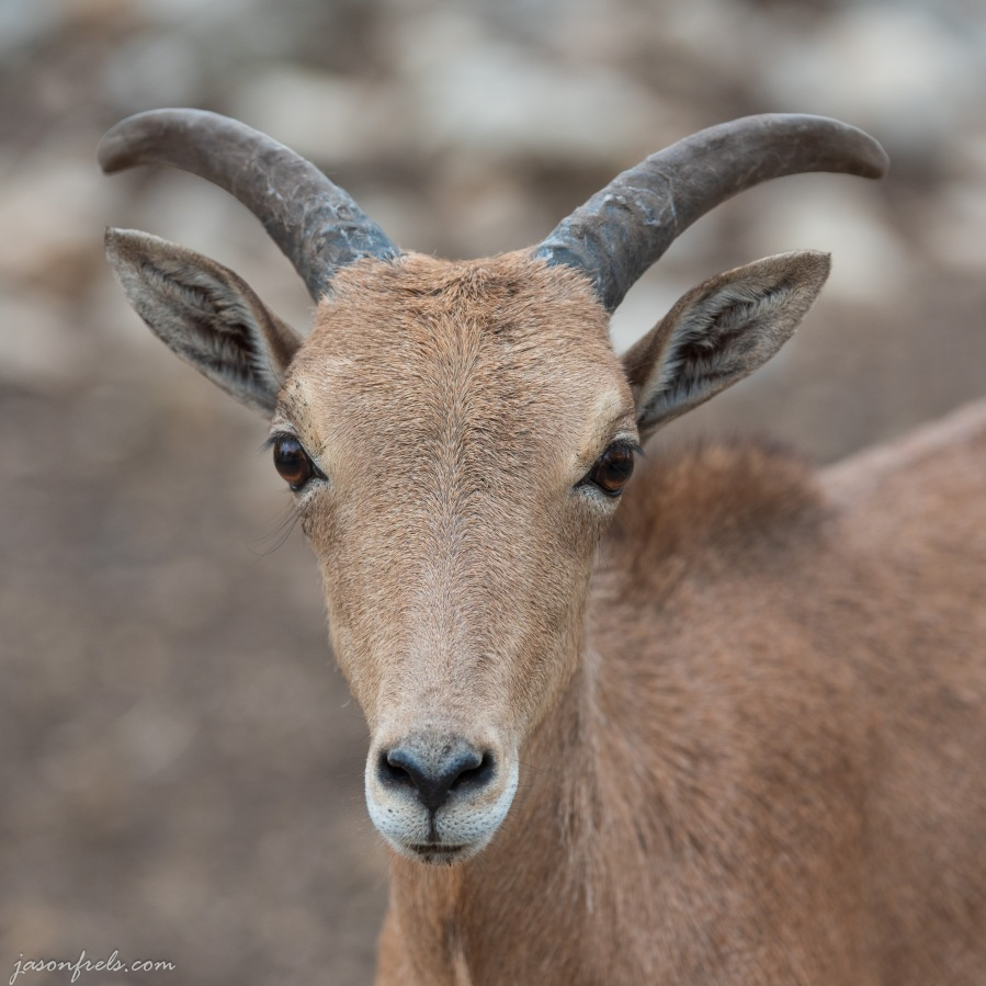 Animal-safari-1