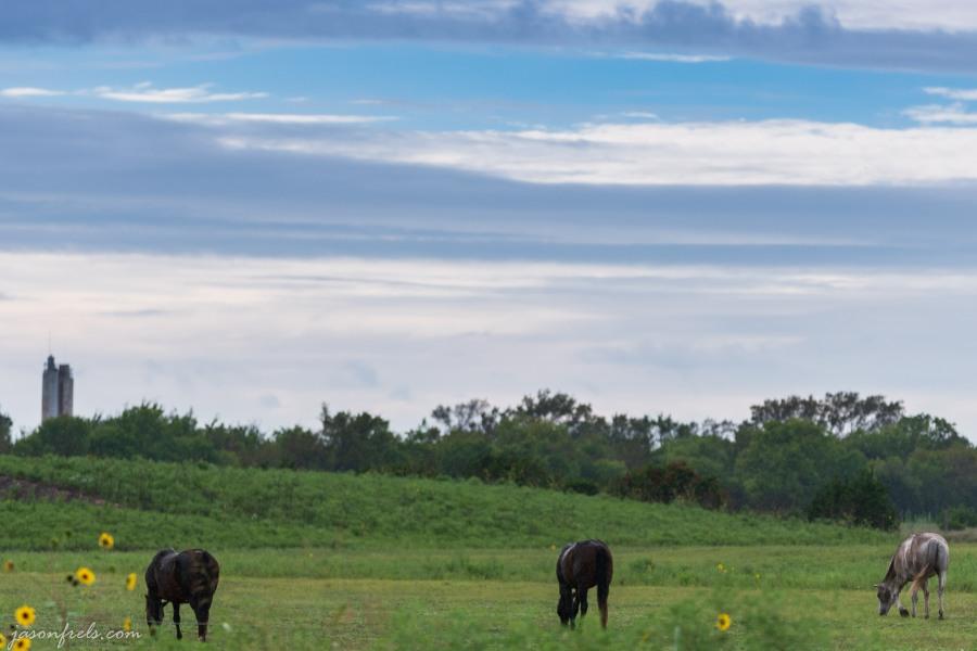 Horses in the rain in Leander Texas