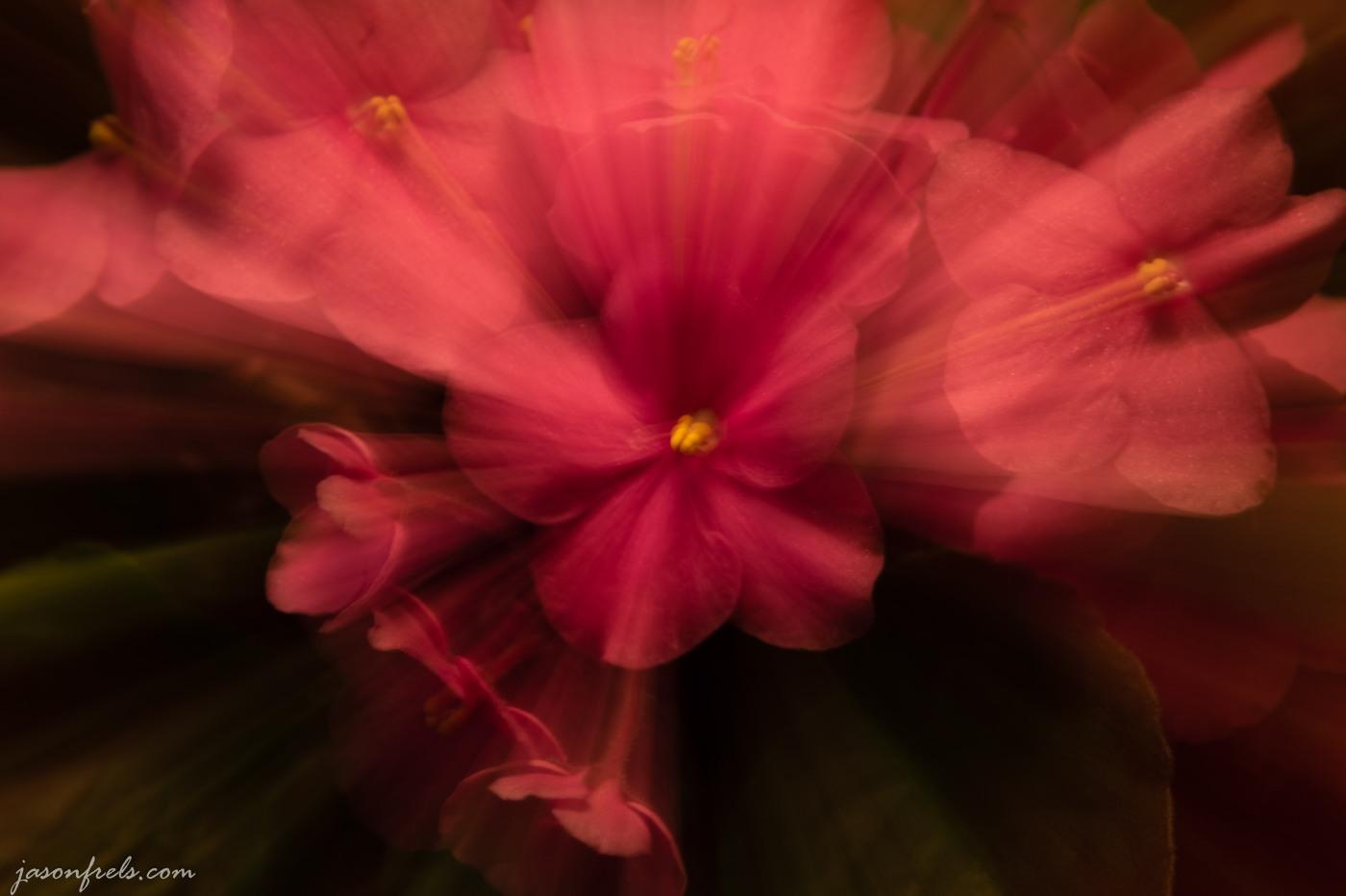Zoom burst effect on flowers