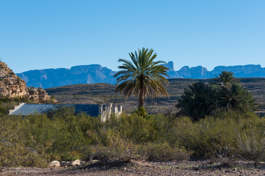 Palm Trees at abandoned hot spring resort in Big Bend National Park