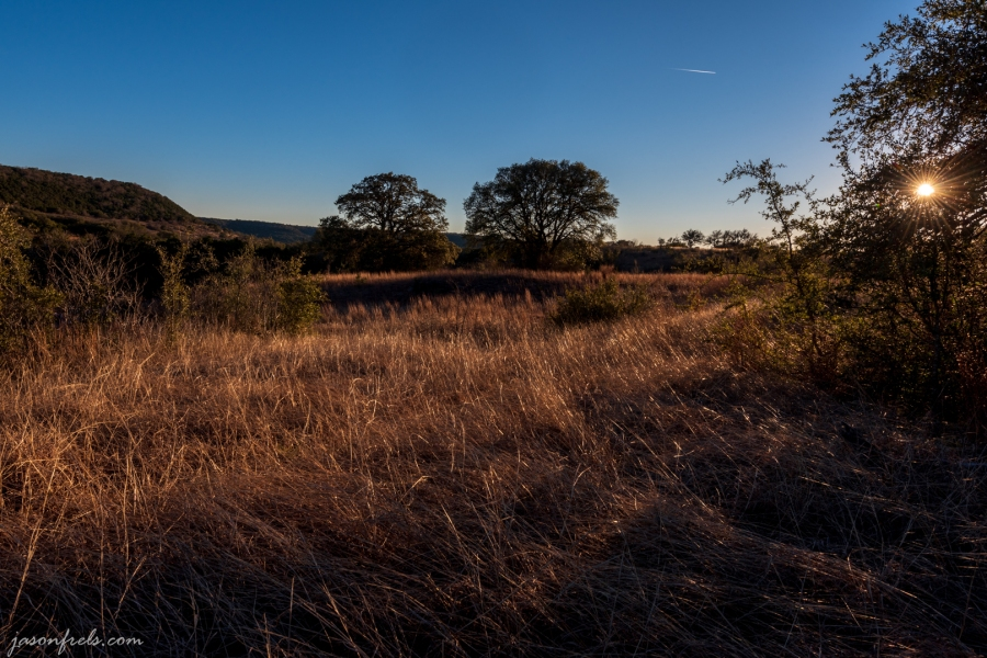 Golden grass in late afternoon sun at Balcones Canyonland National Wildlife Refuge
