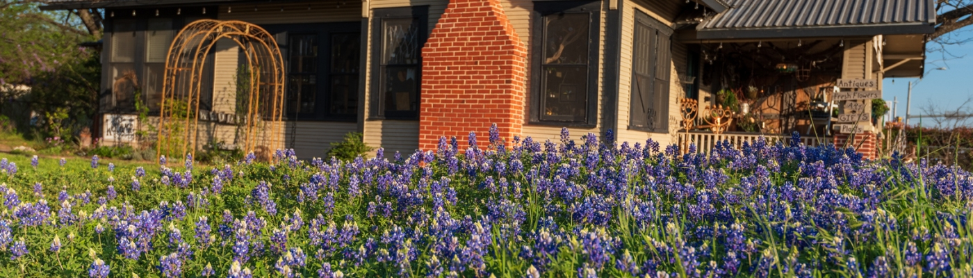 Bluebonnets and Antique Store in Leander Texas