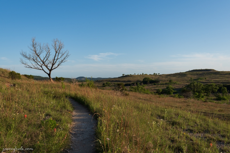 Hiking trail, wildflowers, and a dead tree at Balcones Canyonlands National Wildlife Refuge