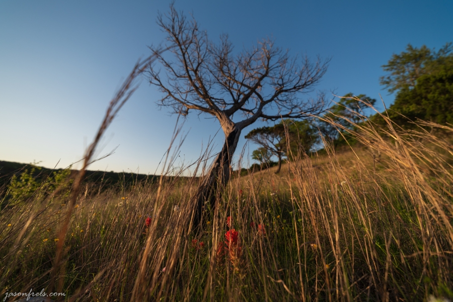 Wildflowers and a dead tree in Balcones Canyonlands National Wildlife Refuge