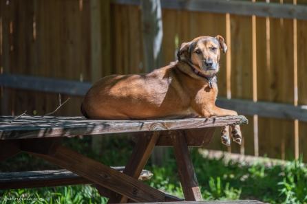 Mia-the-dog