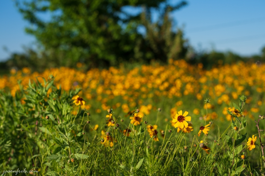 Yellow wildflower close-up