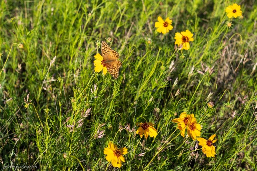 Wildflower-Close-up-3