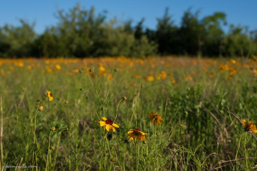 Wildflower-Close-up-4