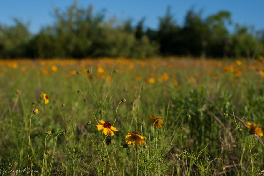 Wildflower-Close-up-5