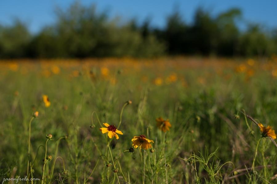 Wildflower-Close-up-6
