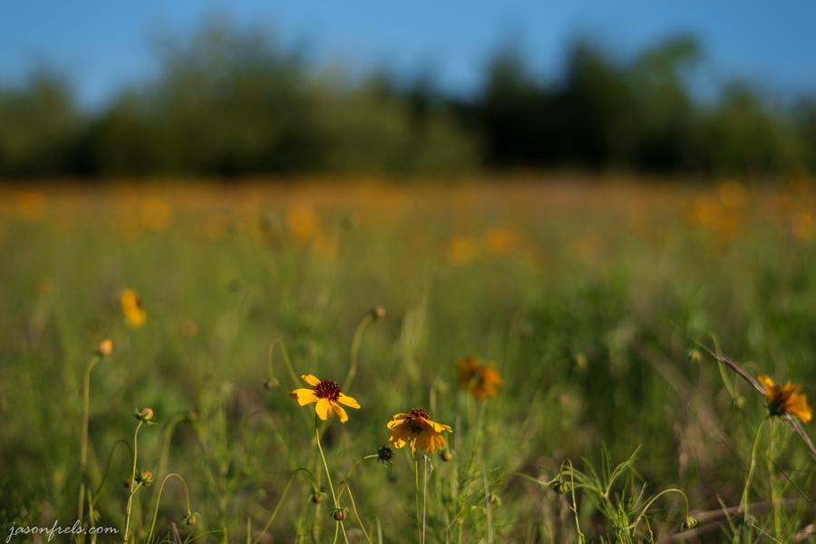 Wildflower-Close-up-7