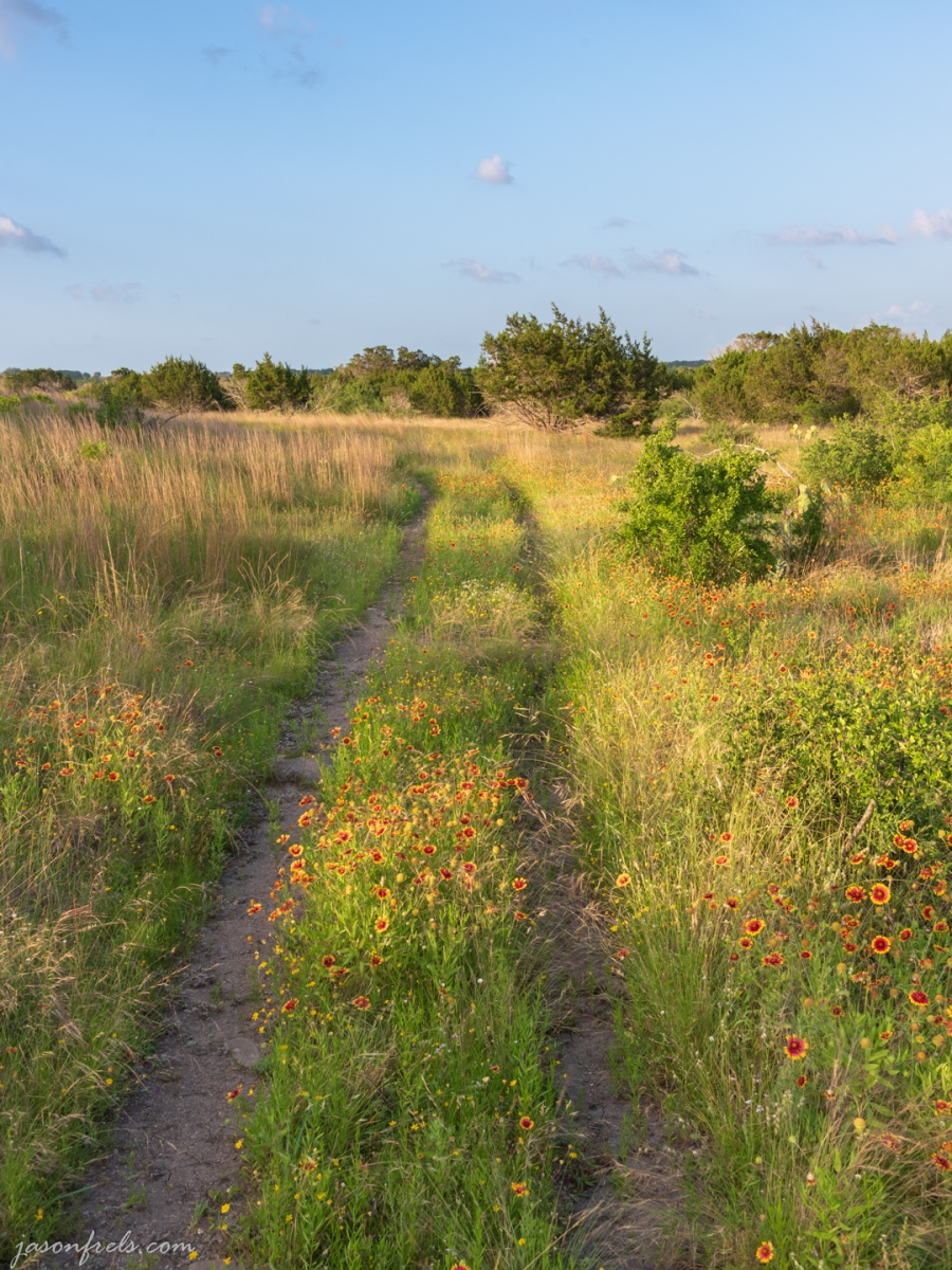 Wildflowers and Hiking Trails at Balcones Canyonlands National Wildlife Refuge