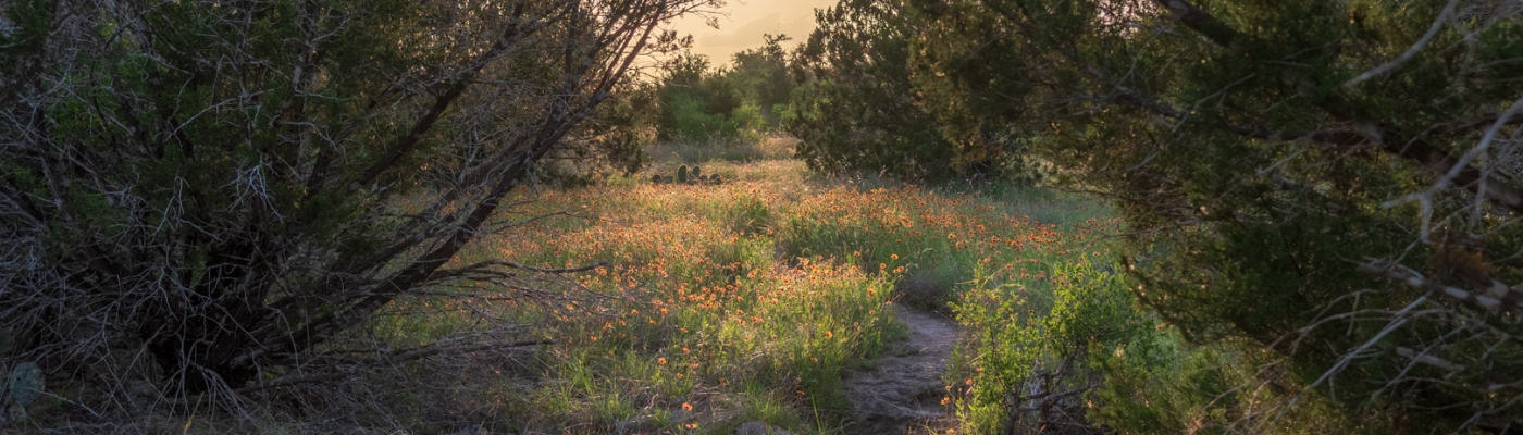 Wildflowers and Hiking Trails at Balcones Canyonlands National Wildlife Refuge HDR