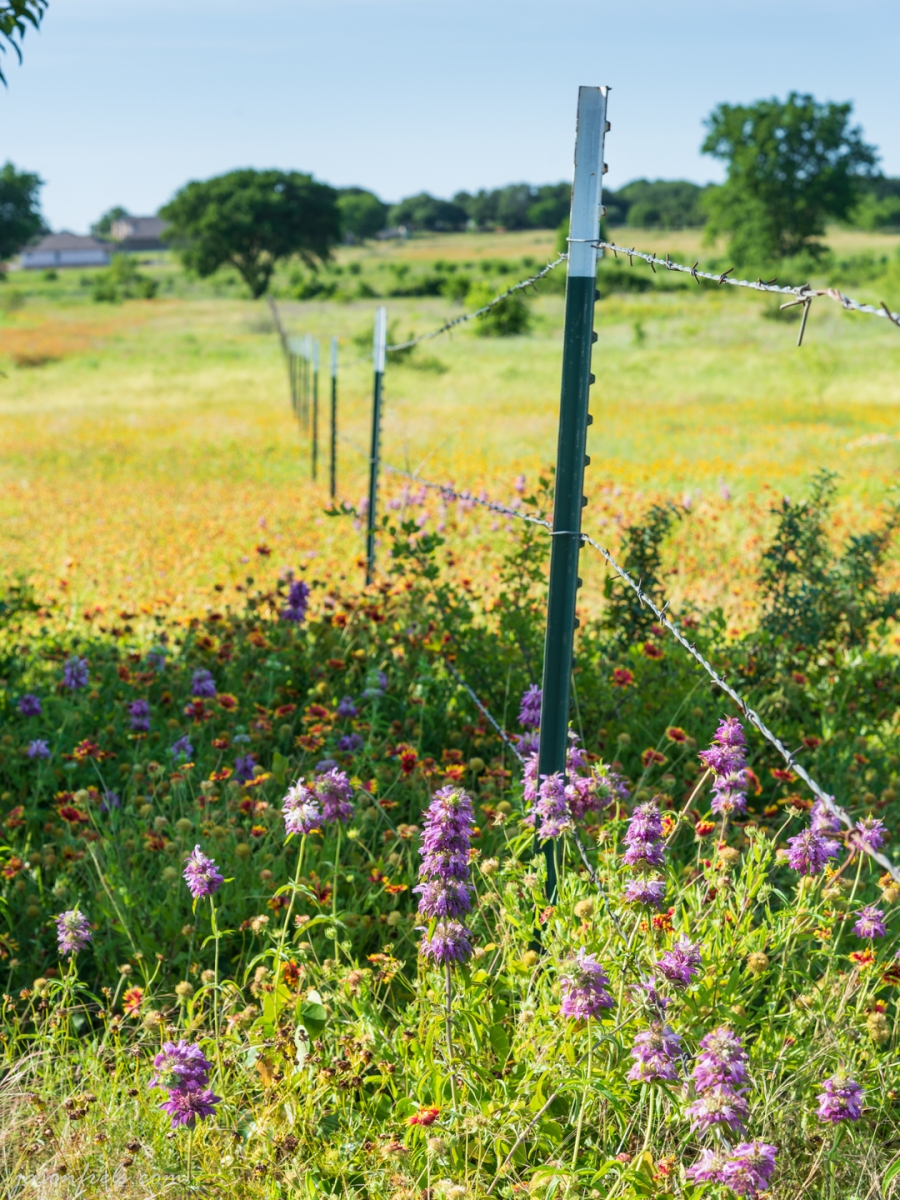 Wildflowers and a Barbed Wire Fence