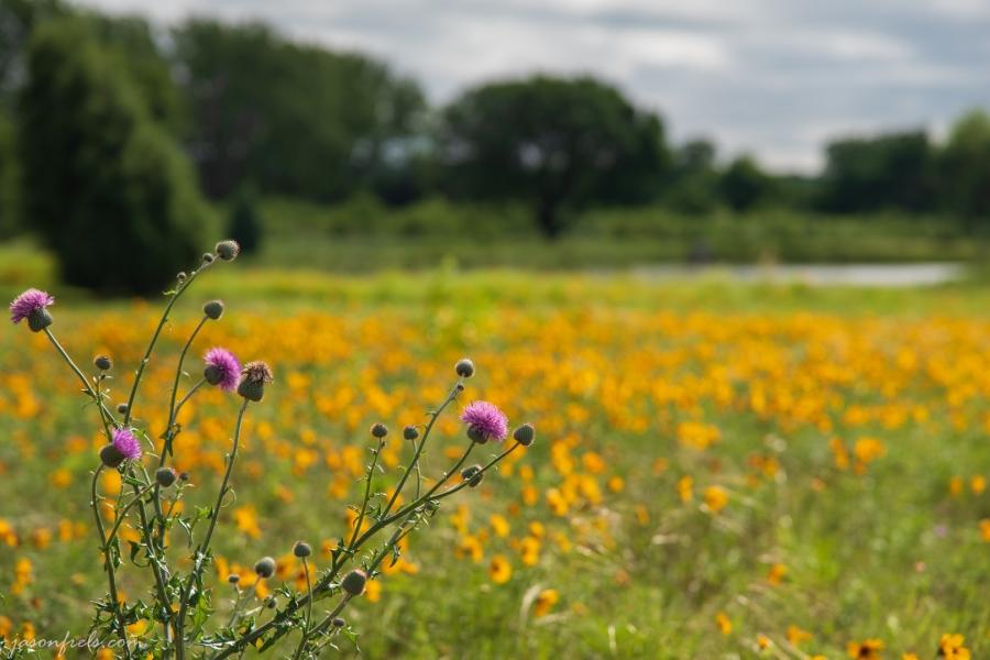 Yellow-Wildflowers-1