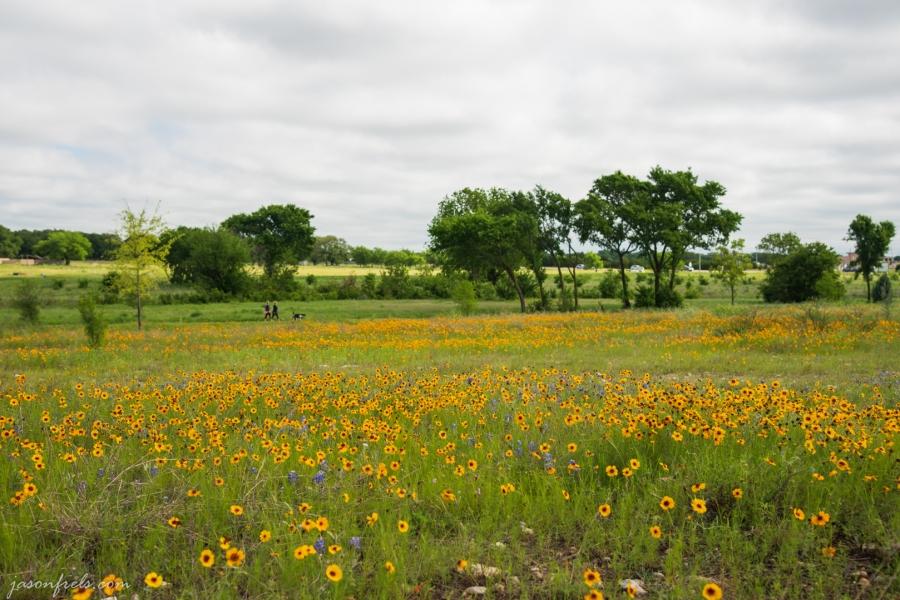 Yellow-Wildflowers-2