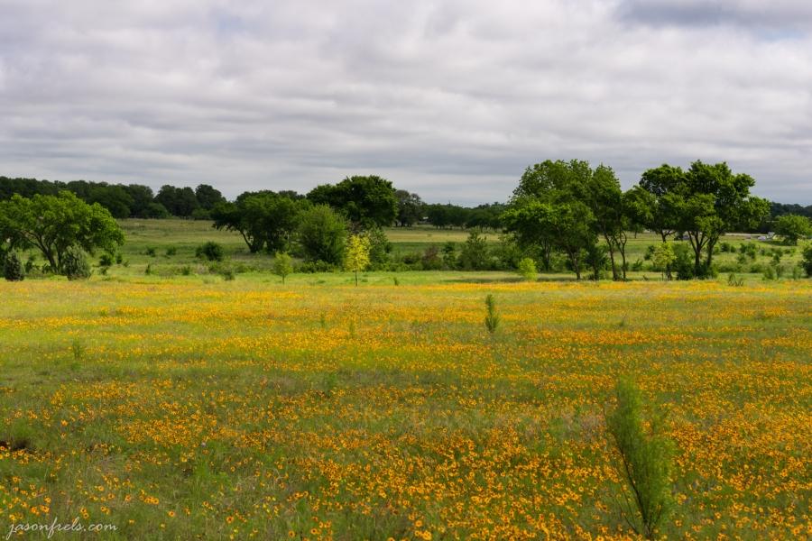 Yellow-Wildflowers-4
