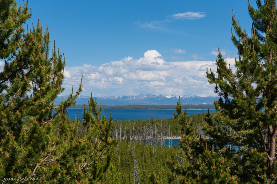 Yellowstone Lake through trees - Yellowstone National Park