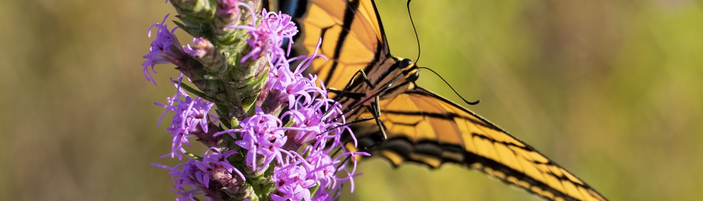 Butterfly Close-up at Balcones Canyonlands