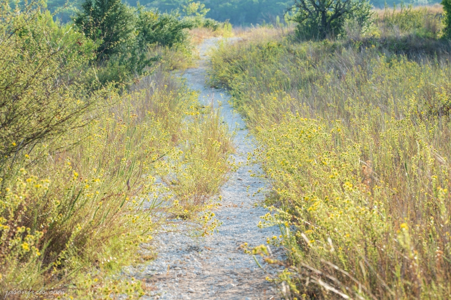 Flower-Lined Hiking Trail at Balcones Canyonlands