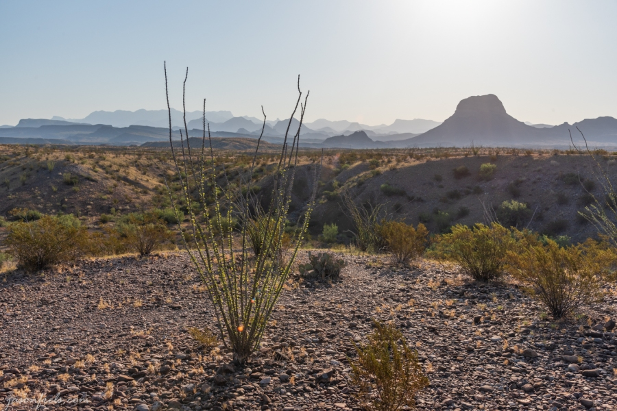 Desert Landscape at Big Bend National Park