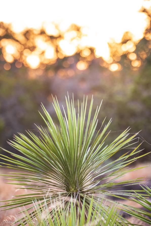 Yucca-Inks-Lake-Sunset