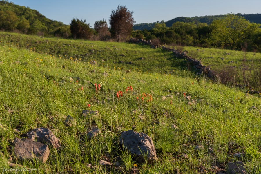 Wildflowers and an Old Stone Wall