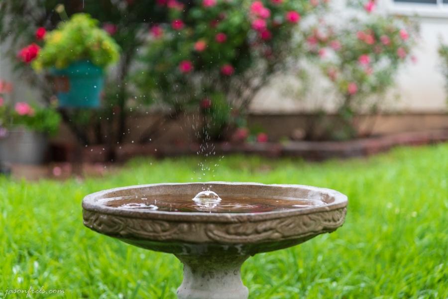 birdbath-raindrops-1