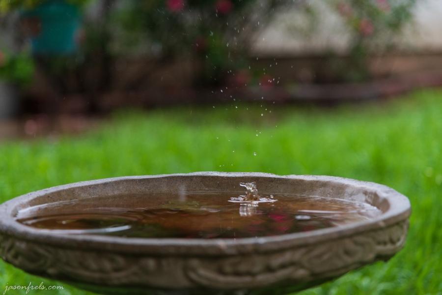 birdbath-raindrops-2