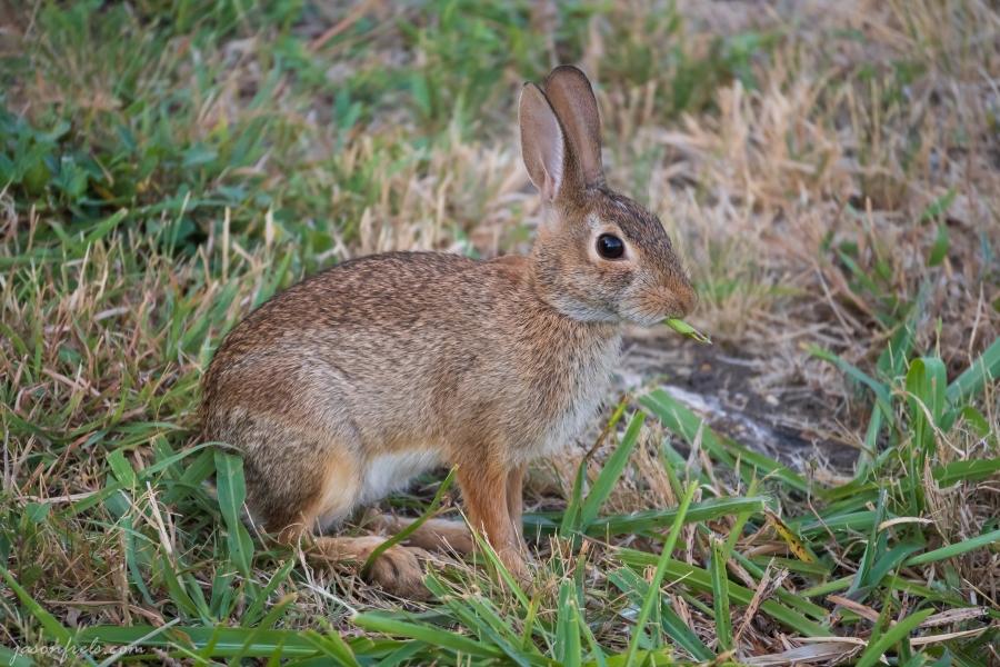 Leander-Rabbit-2
