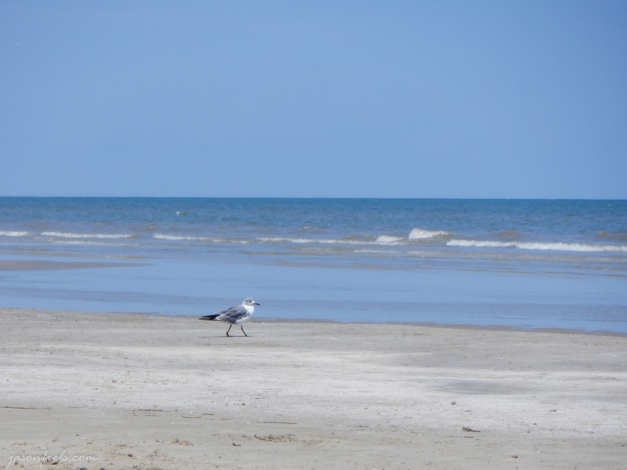 Sea-gull-beach